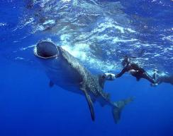 Tim Blanton and Whaleshark videos and DVDs for sale